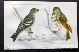 Goldsmith 1851 Hand Col Bird Print. White Winged & American Crossbill